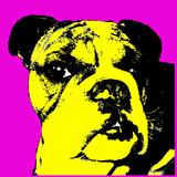 Szef strza? Z pi? Knym bulldog rasy psa pop-artu