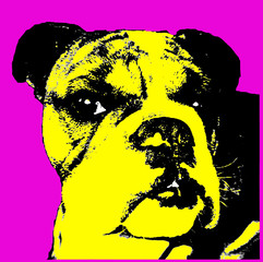 Head shot of beautiful Bulldog breed dog pop art