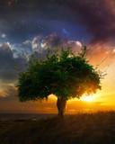 Single tree at sunset
