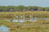 paisajes de aves y marisma en las salinas