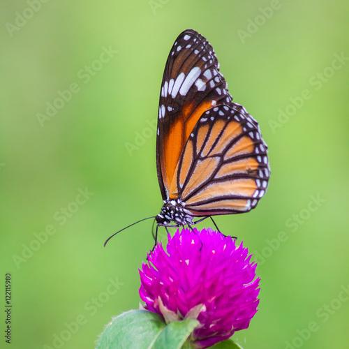 Deurstickers Vlinder Butterflies and flowers natural