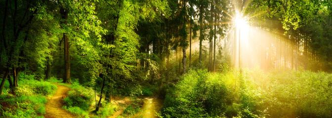 Waldweg neben einem Bach, idyllischer Sonnenaufgang im Wald © John Smith