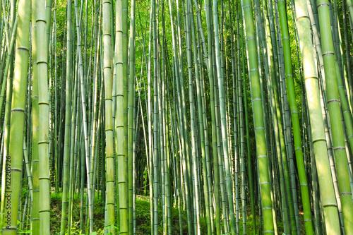 In de dag Bamboo the green bamboo grove downing sunshine / A view of the green bamboo grove downing sunshine in korea