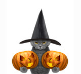 Cute cat in a costume with two halloweens pumpkins