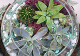 Decorative glass vase with succulent and cactus plants. Glass interior terrarium with succulents and cactuses.Miniature garden in glass with cactuses and succulents. Top view.