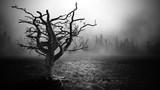 Fototapety Dark Horror  Spooky  tree.