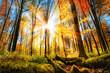 Herbst Szenerie im Wald mit viel Sonne und buntem Laub