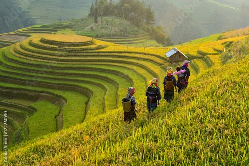 Papiers peints Bali Rice fields on terraced of Mu Cang Chai, YenBai, Vietnam