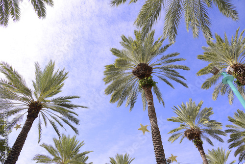 Palm Trees Decorated For Christmas Buy Photos Ap Images Detailview