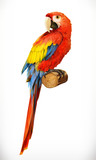 Ara parrot. Macaw. Photo realistic. 3d vector icon - 122298183