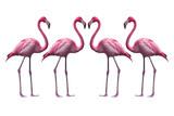Bird flamingo walking on a white background , flamingo isolated on white background ,Beautiful bird flamingo