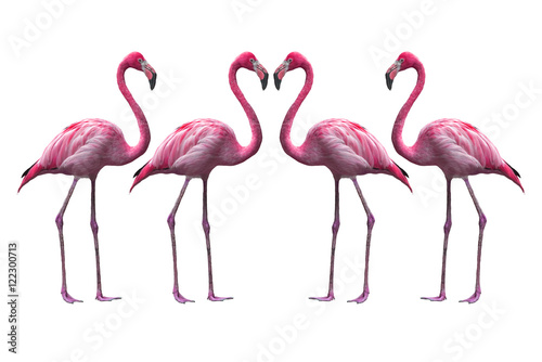 Bird flamingo walking on a white background , flamingo isolated on white backgro Poster