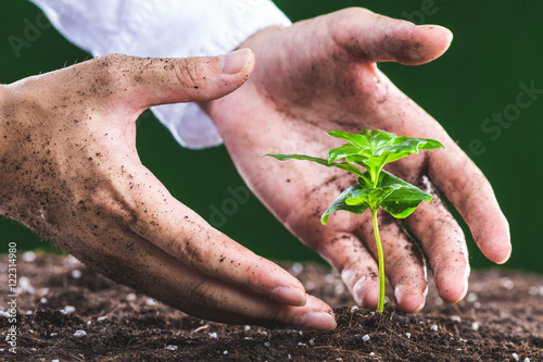 植物を育てる人間の手 Poster