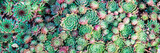 Fototapety Succulents. Natural background.