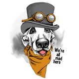 Portret zabawny pies w czapce z okularami - steampunk