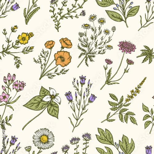 Fototapeta Wild flowers and herbs. Seamless floral pattern. Vector vintage illustration.