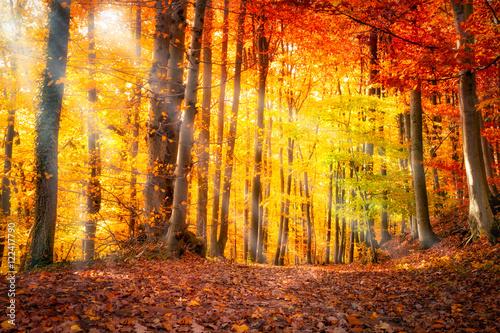 Forêt en automne avec la lumière du soleil Poster