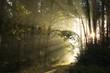 Forest path at sunrise. September