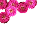 Beautiful background of pink flowers
