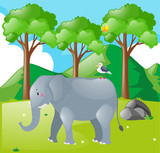 Scene with elephant and bird in the field