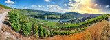 Fototapety Panoramic landscape with autumn vineyards