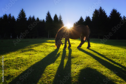 horse with backlight