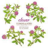 Fototapety clover vector set