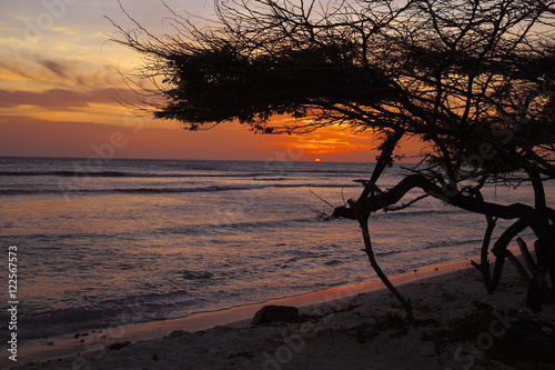 Poster Aruban Sunset with Divi Divi Tree