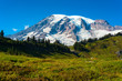 Summit of Mount Rainier above high meadows