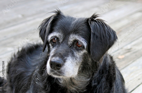 Old Mixed Breed Dog