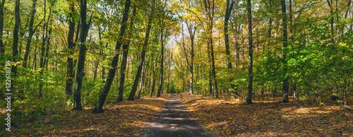 path autumn forest