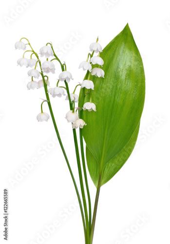 Fotobehang Lelietjes van dalen Convallaria majalis flowers