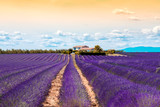 Beautiful landscape view on the lavender field with farmhouse and mountains in Provence in France