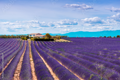 Poster Snoeien Beautiful landscape view on the lavender field with farmhouse and mountains in Provence in France