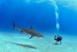 Shark in Bahamas - 122682747