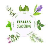 Italian seasoning. Vector