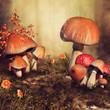 Kolorowe grzyby na jesiennej łące