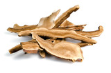 Lingzhi mushroom, Chinese traditional medicine, GanodeLingzhi mu