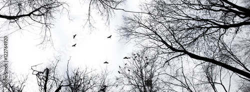 Fototapeta header panorama dark silhouette of trees