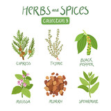 Herbs and spices collection 3 - 122766987