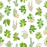 Herbs and spices seamless pattern - 122767149