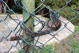 Damaged wire fence