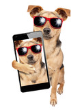 Dog sunglasses posing selfie shot mobile isolated