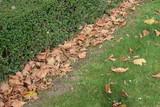 Arbustos y plantas de otoño.
