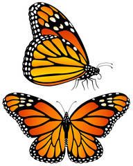 Vector illustration of monarch butterflies, both a side view and a top view.