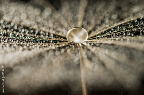 Keuken foto achterwand Paardebloemen en water dandelion seed with drops in the twilight