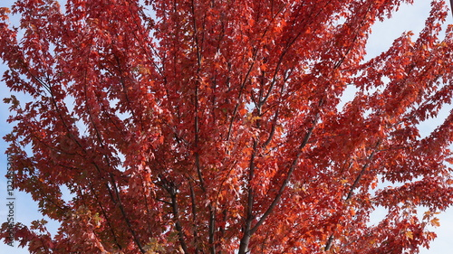 Staande foto Bordeaux Rougeurs d'automne