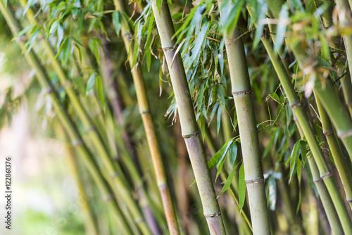 Fotobehang Bamboe Bamboo trees in Korea - Asian landscape