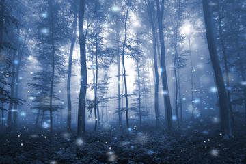 Artistic blue color foggy forest tree fairytale landscape with abstract fireflies.  © robsonphoto