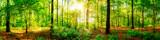 Wald Panorama mit Sonnenstrahlen im Herbst